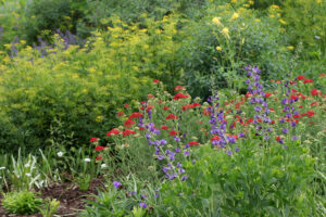 Cover photo for Register Now for a  Spring Tour of the Pollinator Paradise Garden!